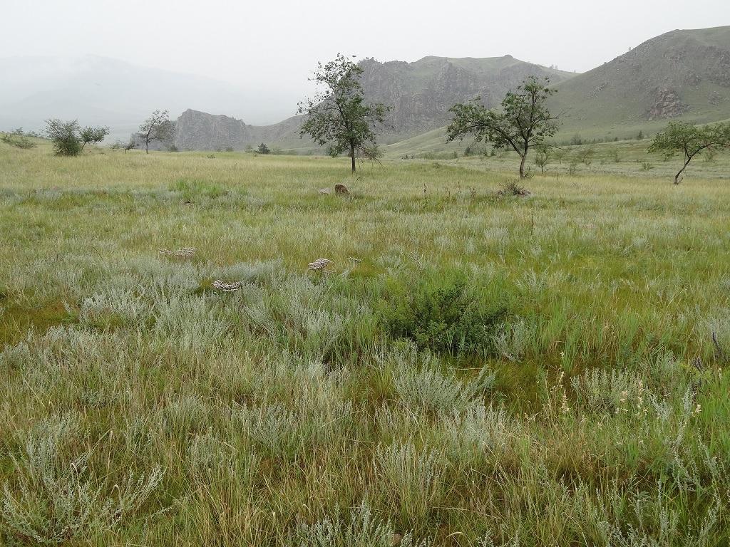 Un teren din Siberia