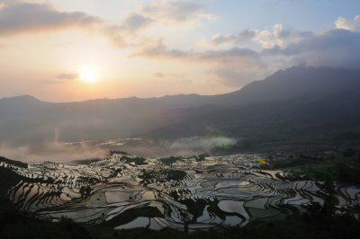 Plantație orez China