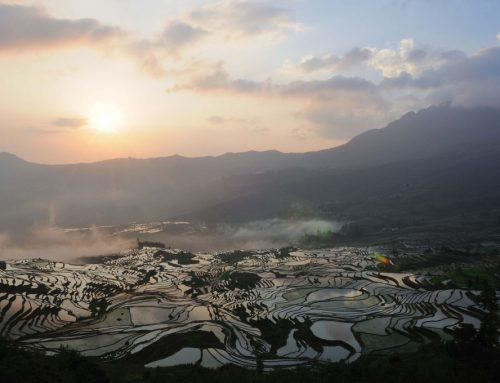 China importă orez din SUA