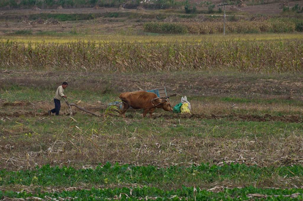 Fermier în Coreea de Nord