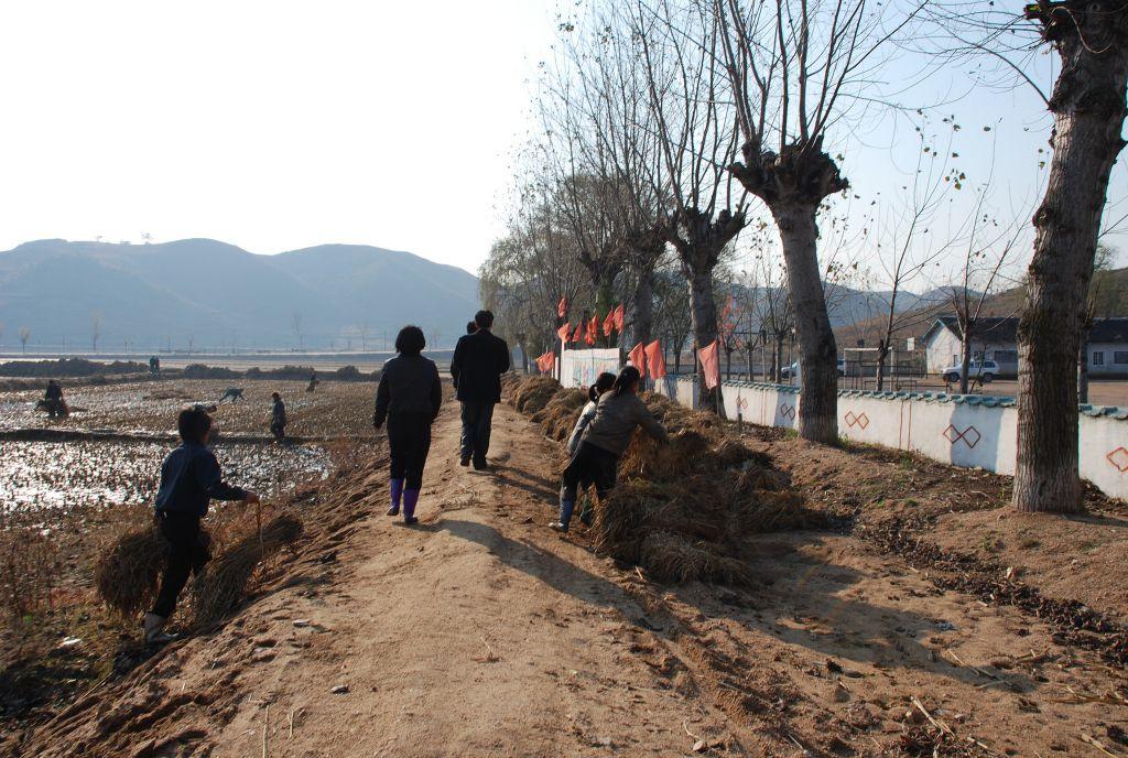 Agricultură colectivizată într-un sat din Coreea de Nord